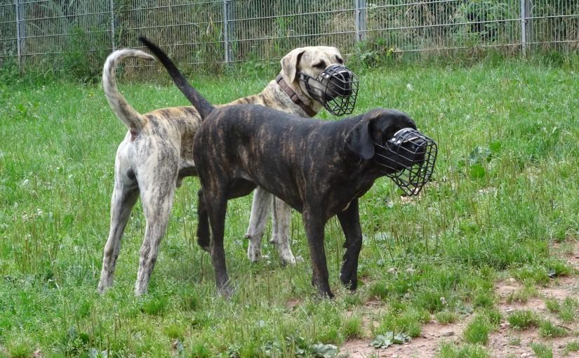 Willkommen beim Hundecampus Odenwald